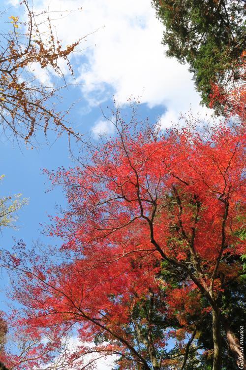 鷲原八幡宮の紅葉。7
