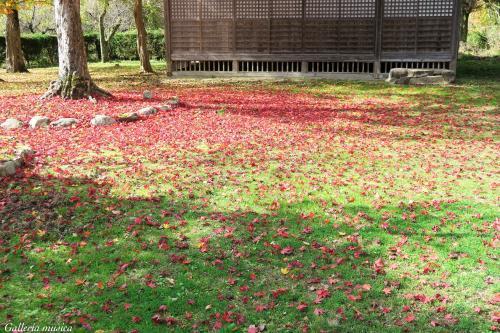 鷲原八幡宮の紅葉。5