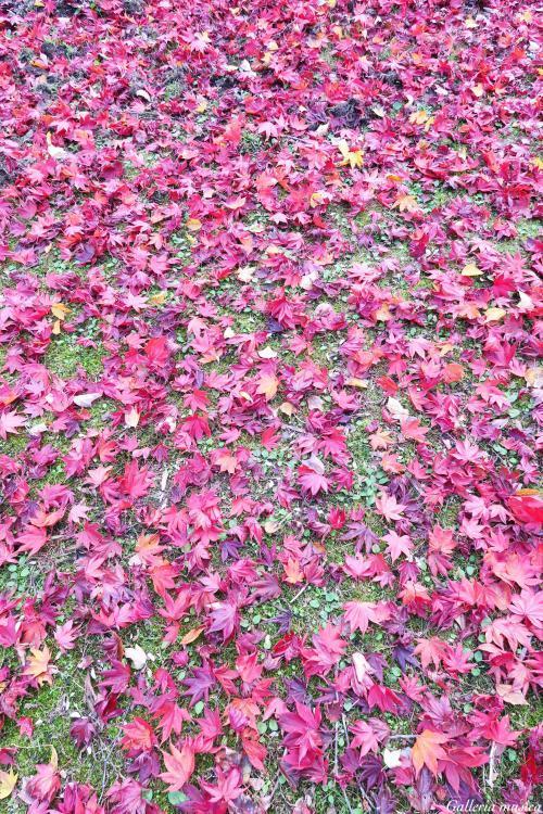 鷲原八幡宮の紅葉。3