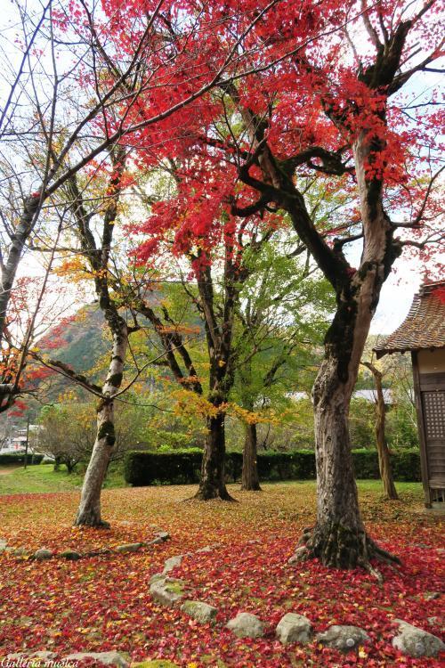 鷲原八幡宮の紅葉。2