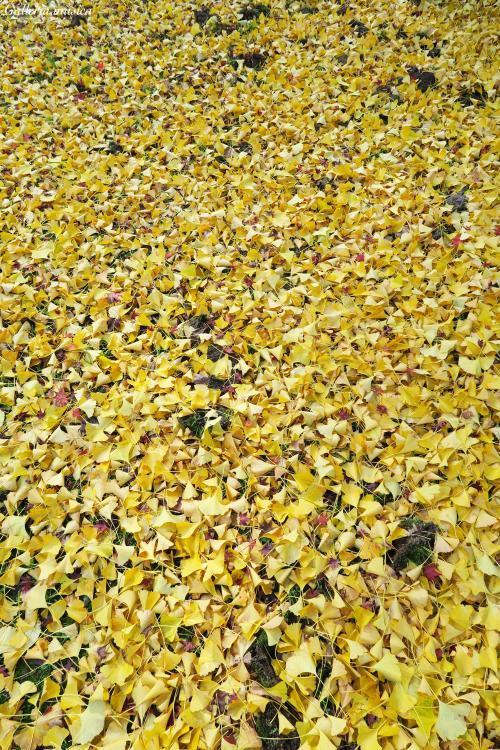 鷲原八幡宮の紅葉。1