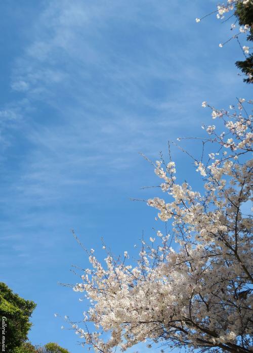 春の夕焼け6