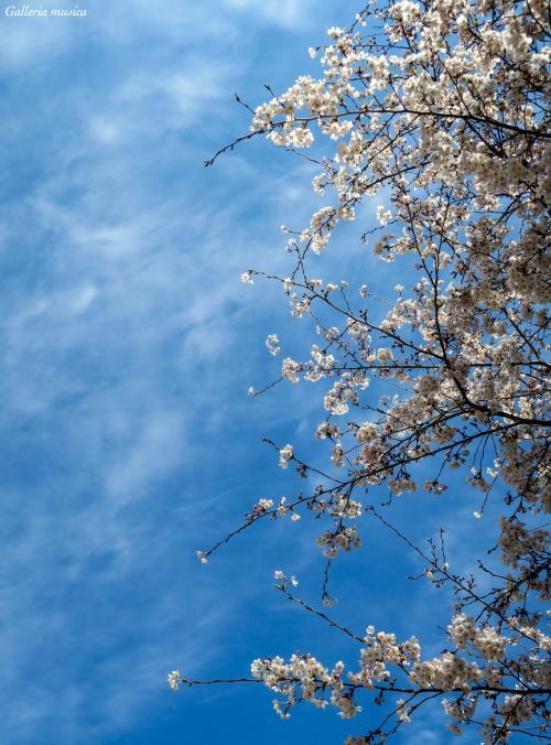 春の夕焼け5