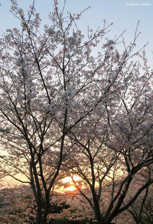 春の夕焼け4