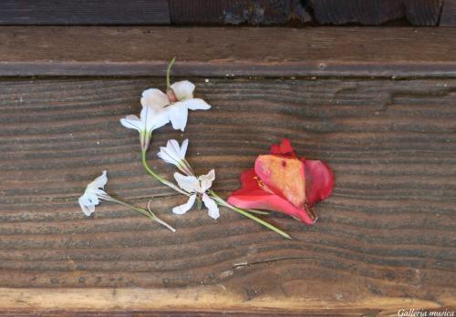 平成最後のお花見1