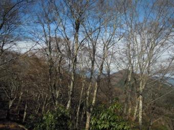 木々の間から武甲山181117