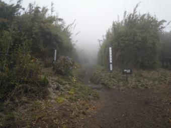 矢倉沢峠金時山への道181204