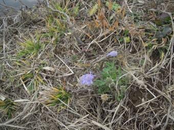 季節外れの花181204
