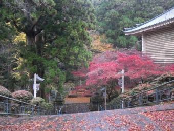 最乗寺モミジ181204