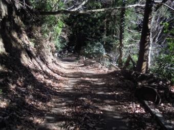 七滝途中の道181230