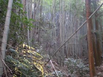 竹林の中を190113