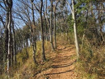 歩きやすいハイキングコース190117