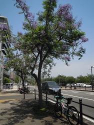 港付近は木が大きいが190606