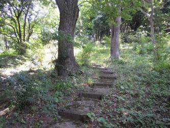 神社の裏から登りの道があるが190606