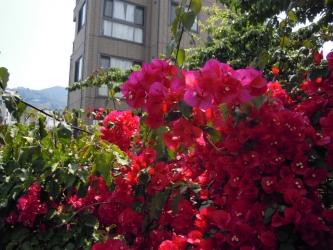 川沿いの花も見事