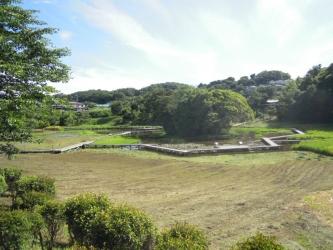 厳島湿性公園190617