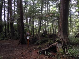 樹林帯を進む190712