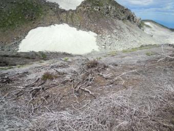 地獄谷からの硫黄で枯れてしまって190727