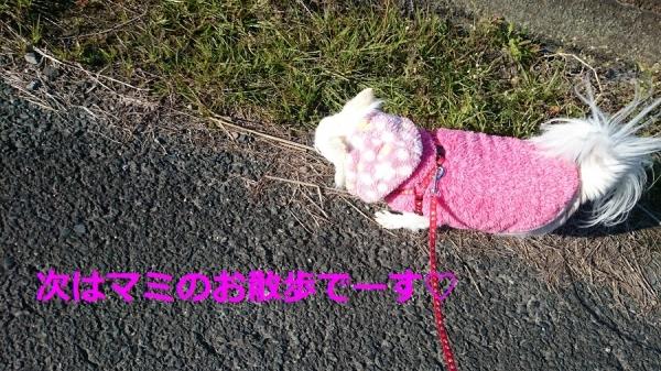 マミのお散歩