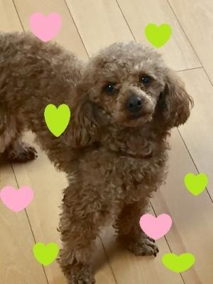 メグミちゃん(sakura)
