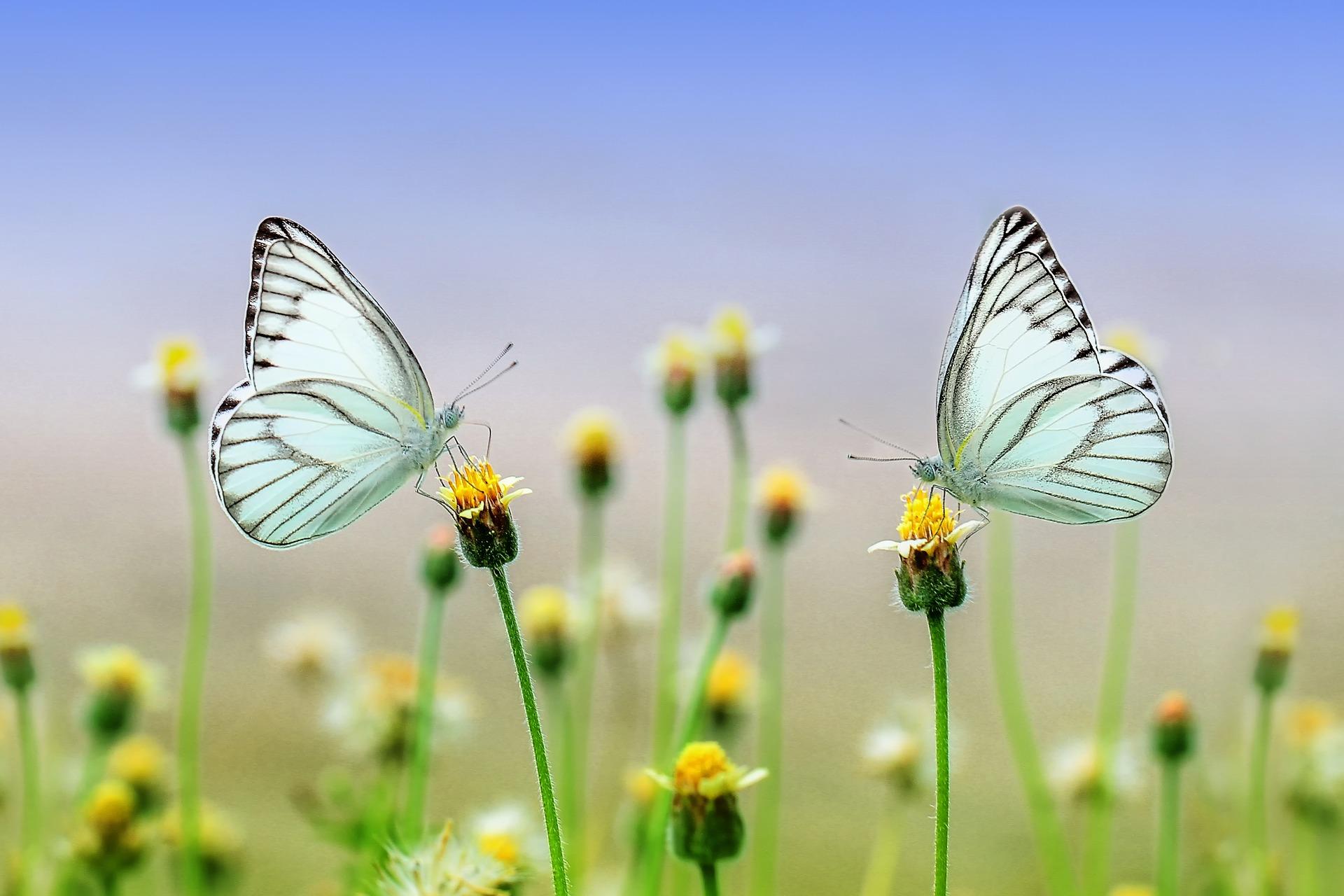 butterfly-1127666_1920.jpg