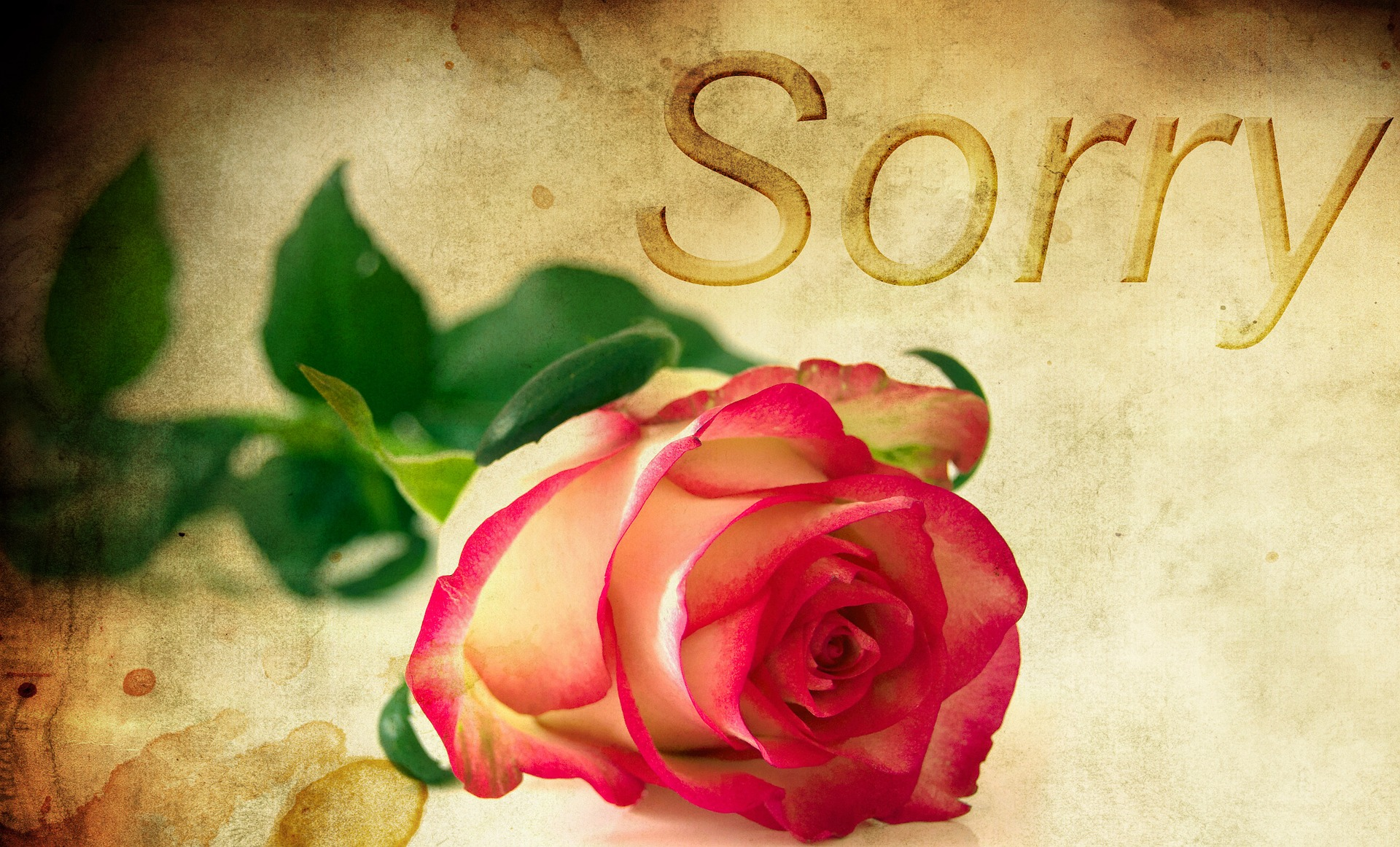 rose-1271216_1920.jpg