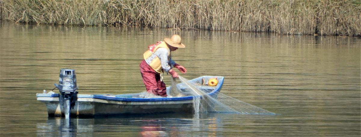 やっちまった!献上鮭を巡って大乱闘~那珂川鮭漁と田口茂兵衛事件 ...