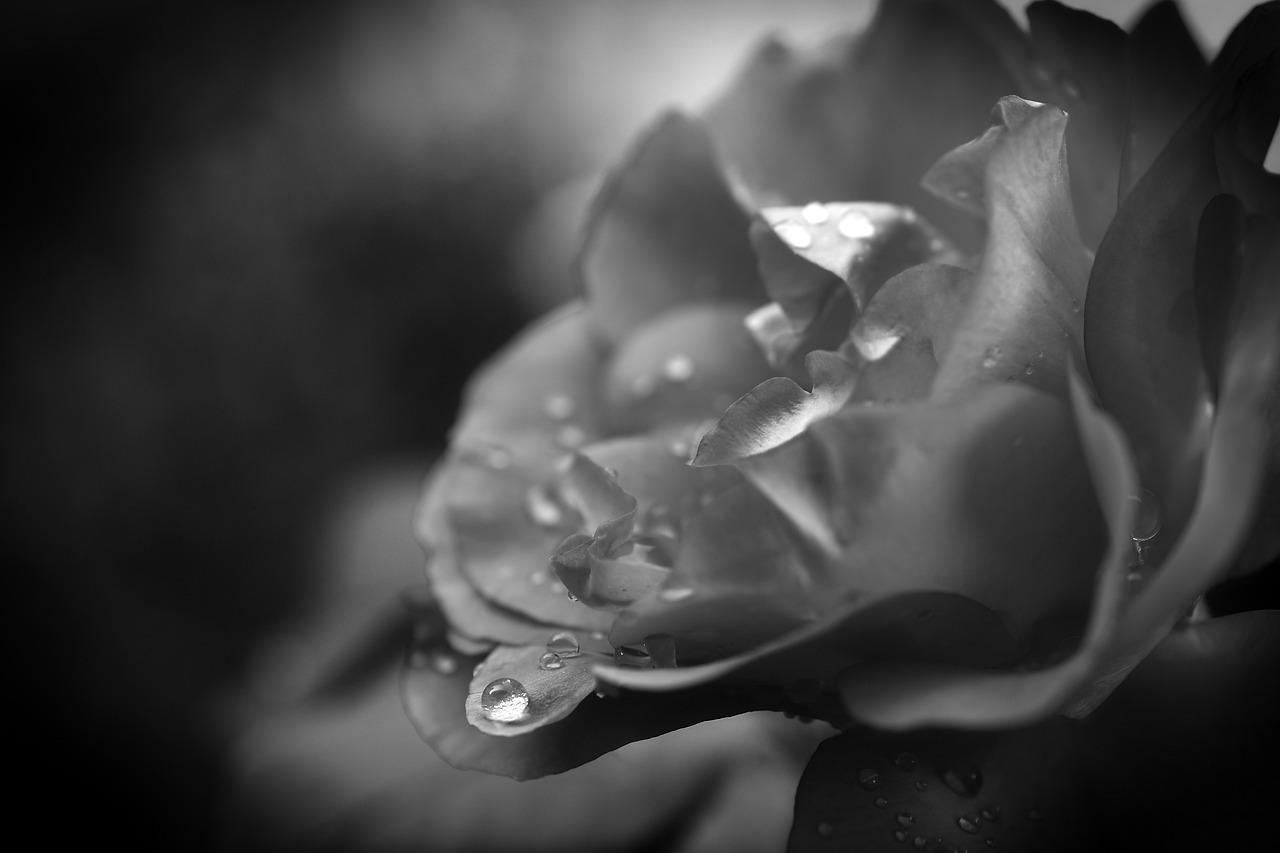 drop-of-water-4447343_1280.jpg