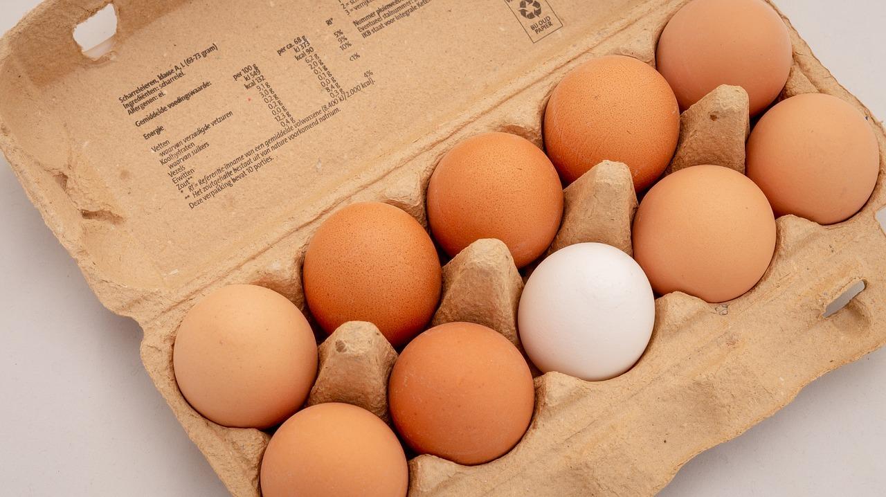 eggs-3446869_1280.jpg