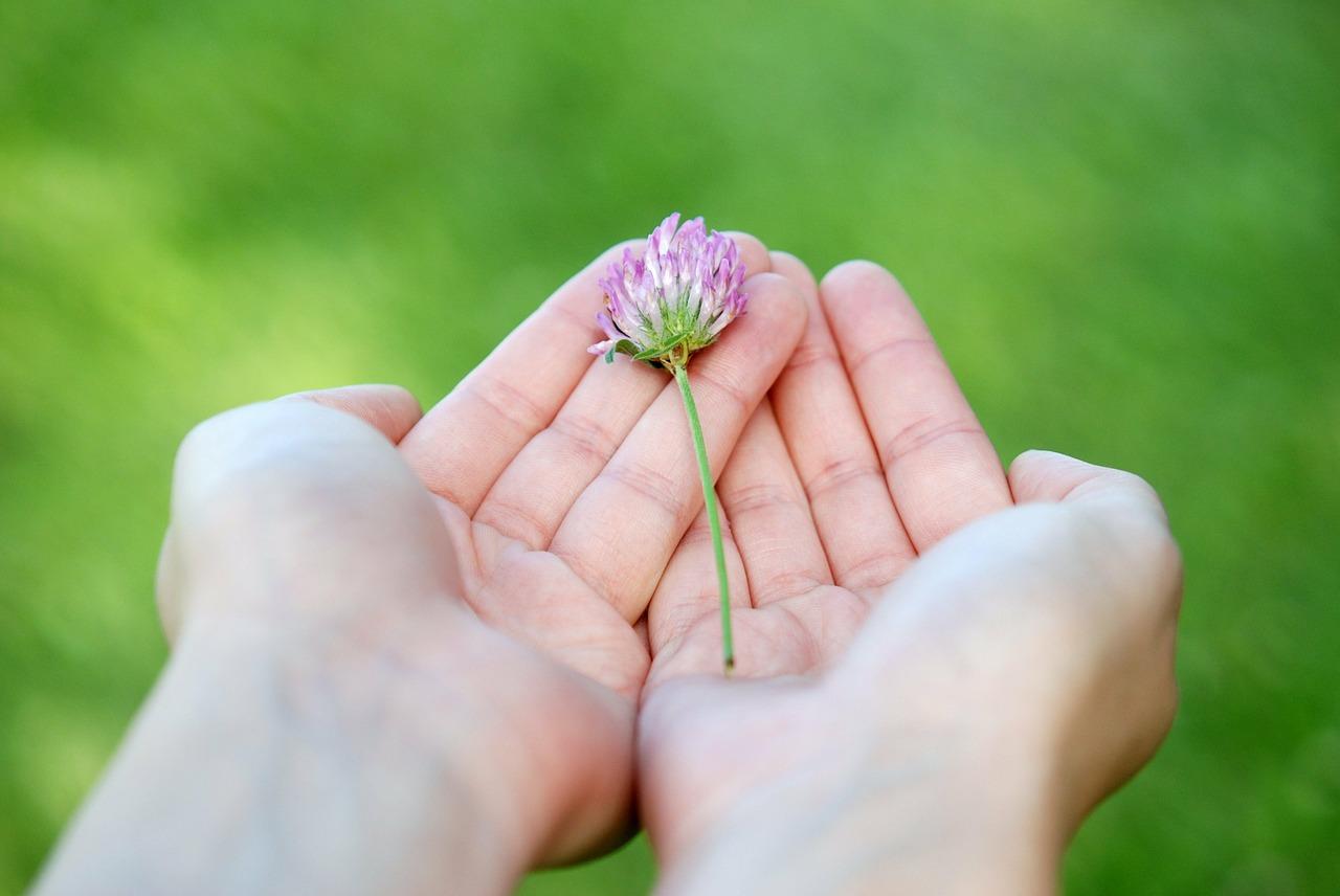 flower-8539_1280.jpg