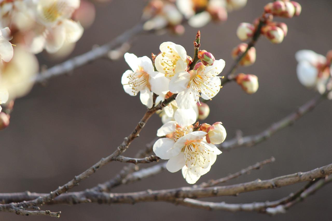 fukushima-722967_1280.jpg