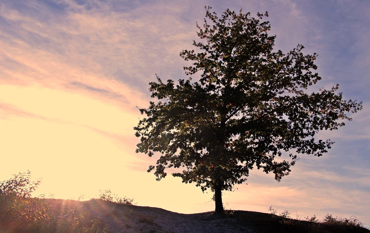 sunset-3755807_1280.jpg