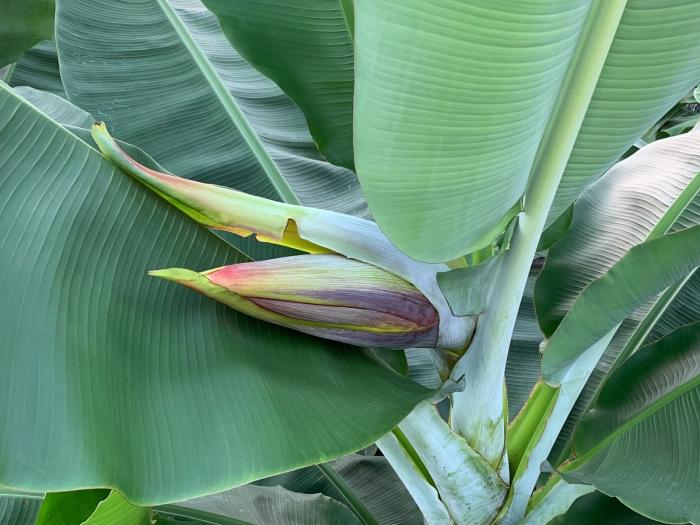 banana19042302.jpg