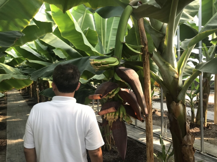 banana19062802.jpg