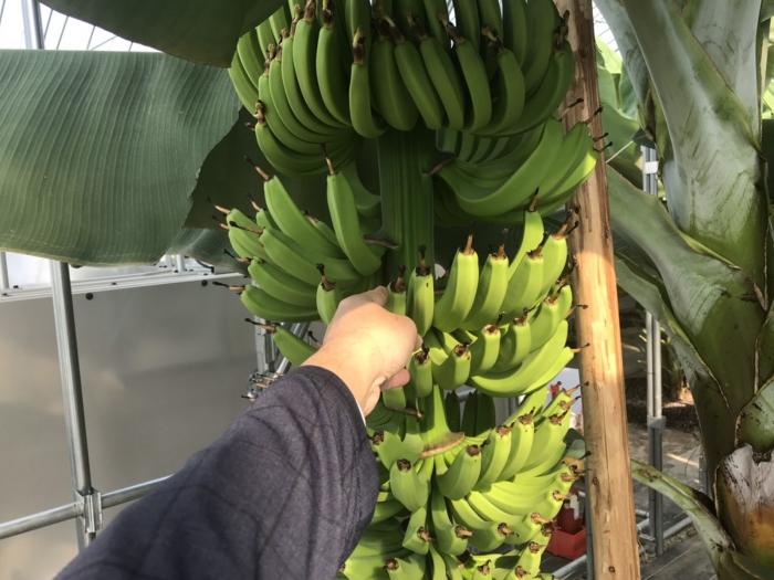 banana19062803.jpg