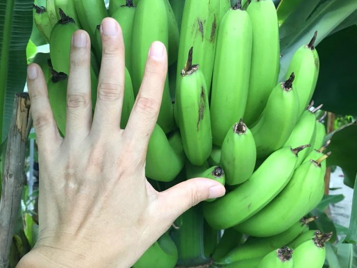 banana19072201.jpg