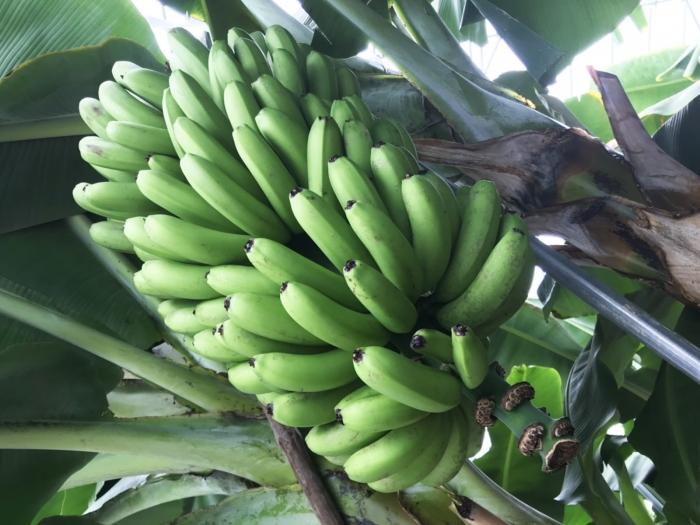 banana19072902.jpg