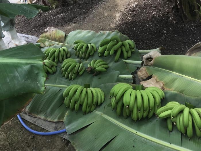 banana19072905.jpg