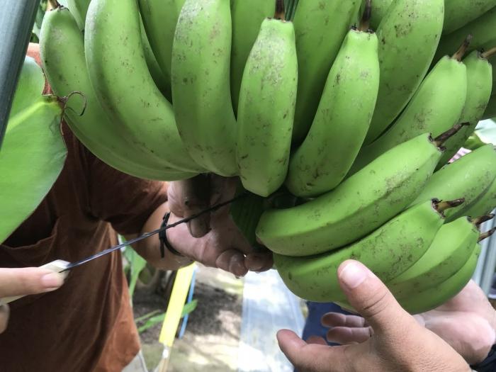 banana19072906.jpg