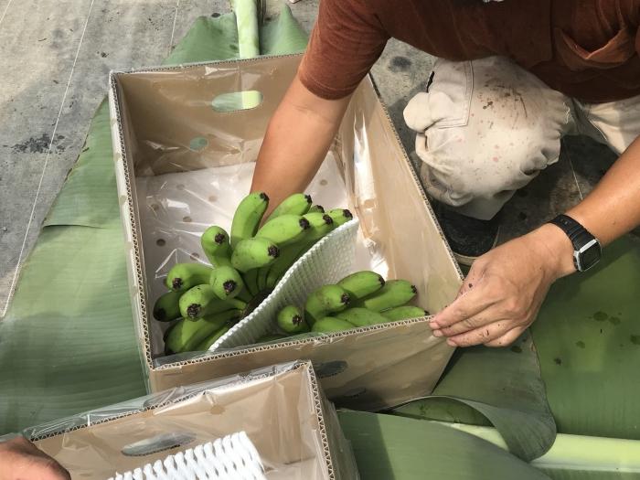 banana19072907.jpg