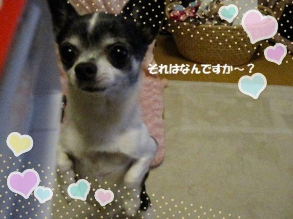 19-02-13-17-04-49-333_deco_20190213170600mochan.jpg