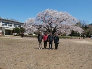 廃校の大桜3