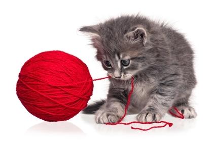 kitty424295.jpeg