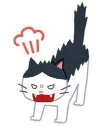 cat_angry.jpg
