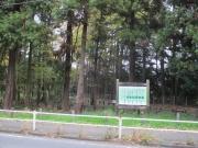 2018/12/2木もれびの森