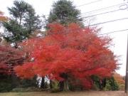 2018/12/2城山湖の紅葉