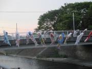 境川の鯉のぼり 2019/5/3 18:21