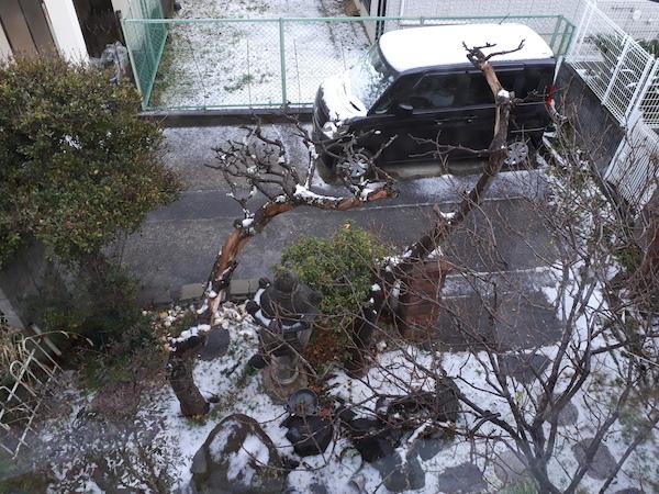 和歌山市に積雪