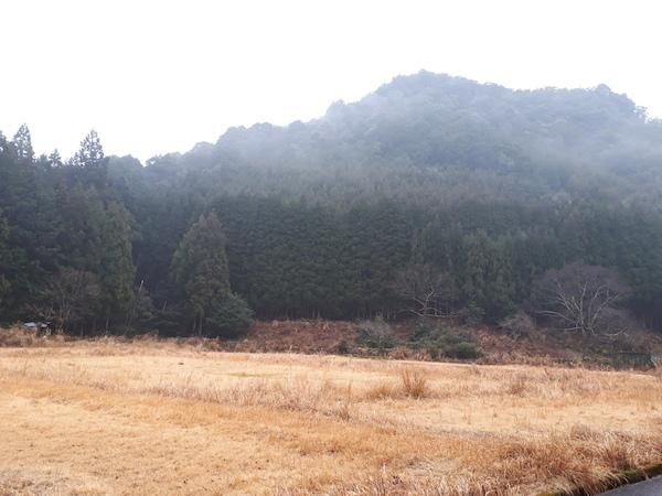 幻想的な大谷湿田