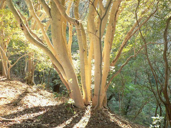 「光る木」2